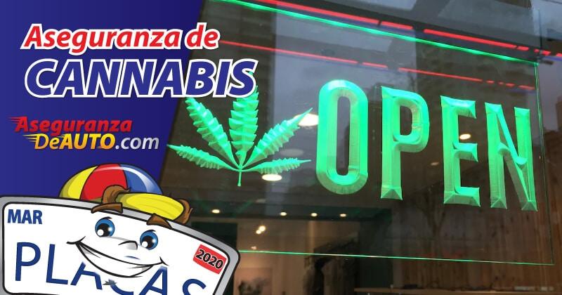 aseguranza de cannabis